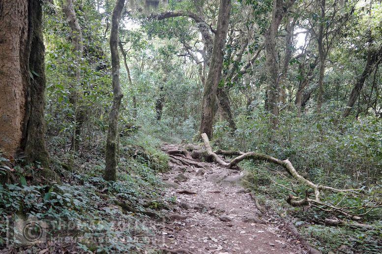 2018_kilimanjaro_2_181