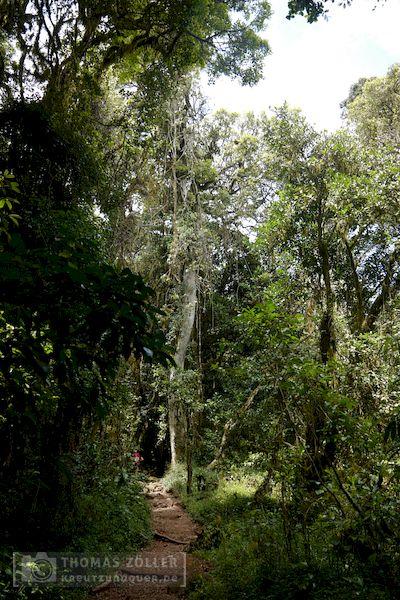 2018_kilimanjaro_2_192
