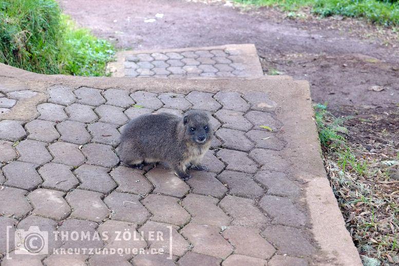 2018_kilimanjaro_2_246