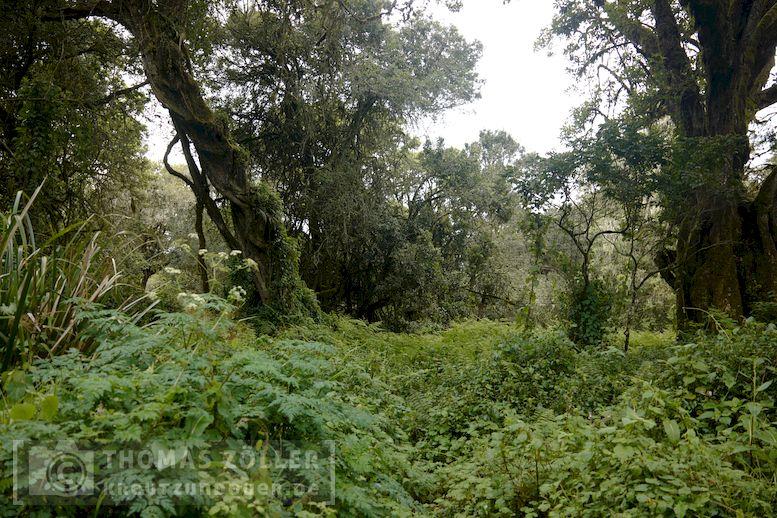 2018_kilimanjaro_3_106