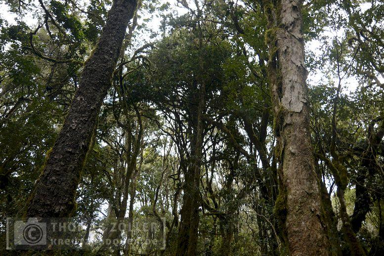 2018_kilimanjaro_3_110