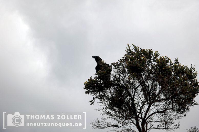 2018_kilimanjaro_3_160