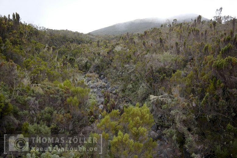2018_kilimanjaro_3_170