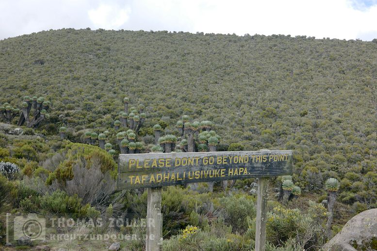 2018_kilimanjaro_3_245