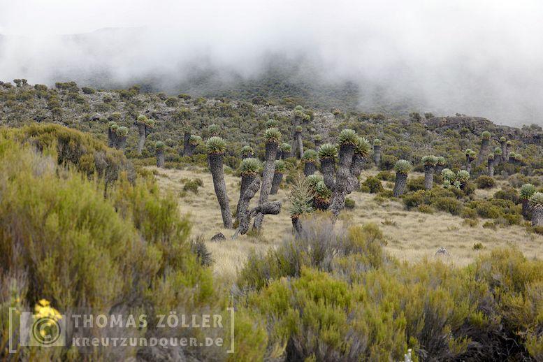 2018_kilimanjaro_4_112