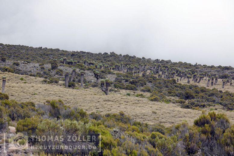 2018_kilimanjaro_4_115