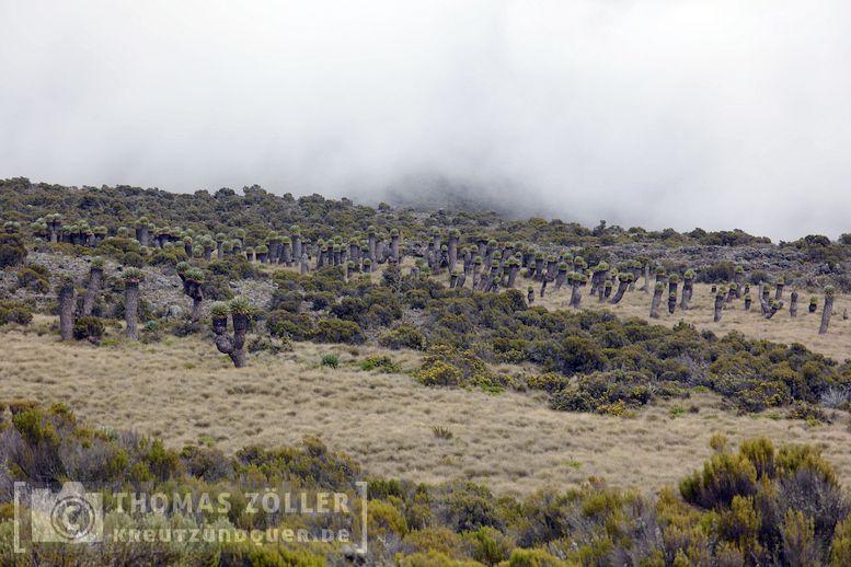 2018_kilimanjaro_4_117