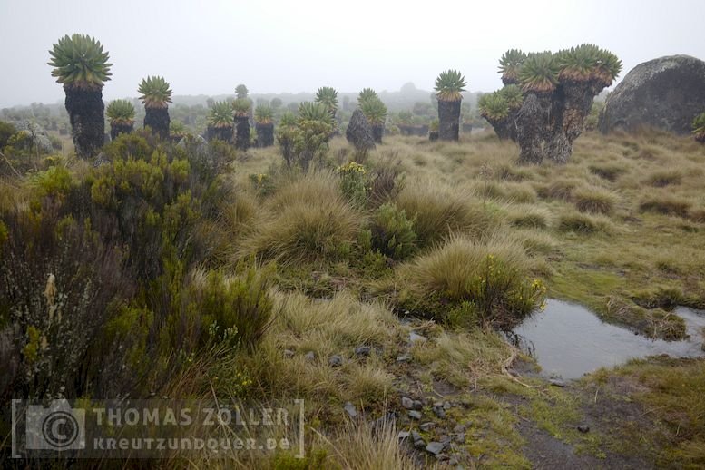 2018_kilimanjaro_5_120