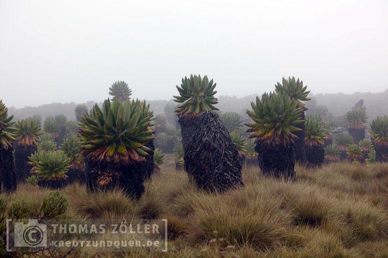 2018_kilimanjaro_5_126