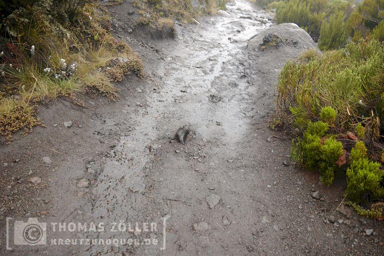 2018_kilimanjaro_5_136