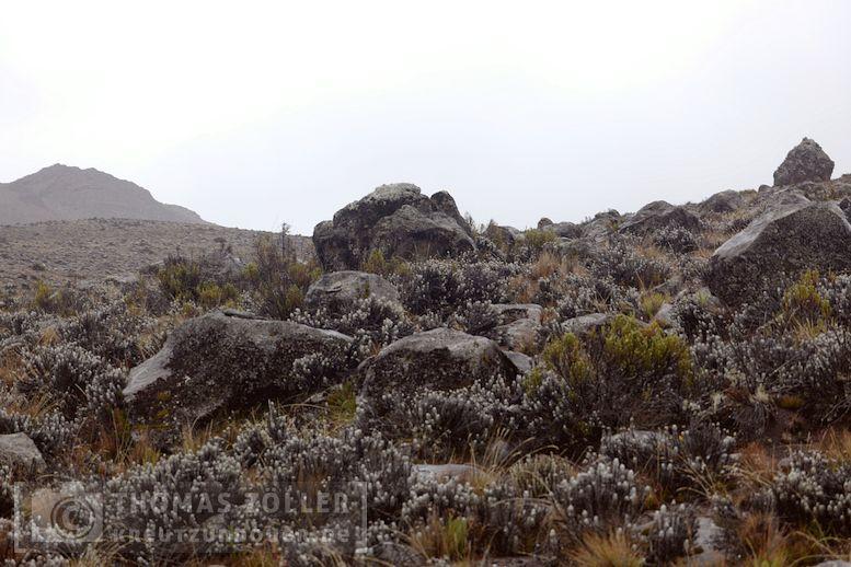 2018_kilimanjaro_5_149
