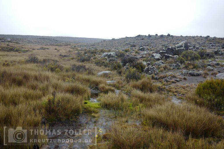 2018_kilimanjaro_5_156