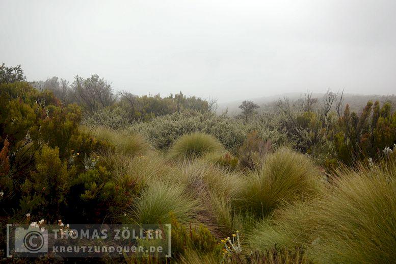 2018_kilimanjaro_6_111