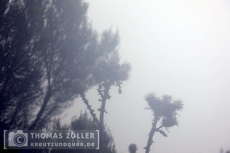 2018_kilimanjaro_6_120