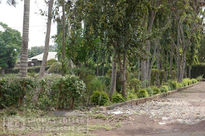 2018_kilimanjaro_7_106