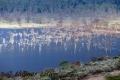08.04.2015 - Lake Nakuru - Kenya