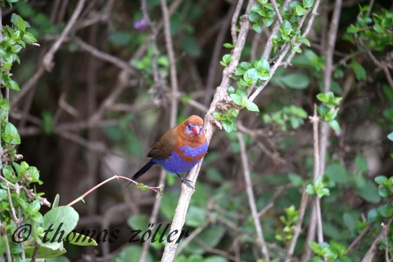 kenya_april_2015_day3_172