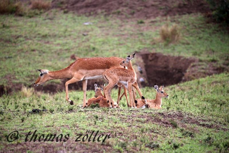 kenya_april_2015_day3_185
