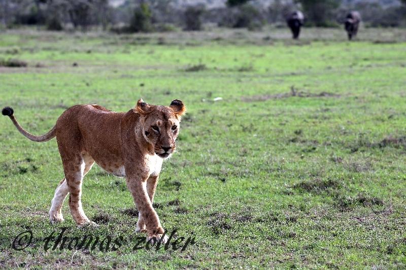 kenya_april_2015_day3_221