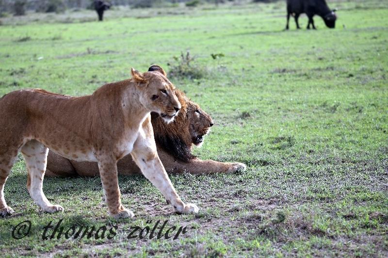 kenya_april_2015_day3_228