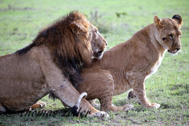 kenya_april_2015_day3_233