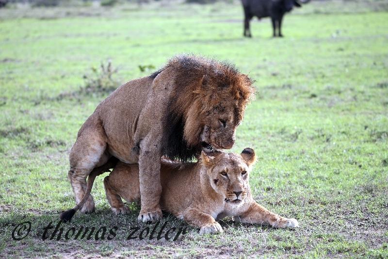 kenya_april_2015_day3_237