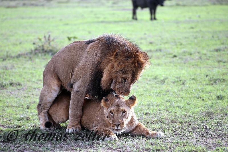 kenya_april_2015_day3_238