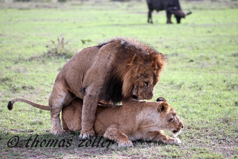 kenya_april_2015_day3_240
