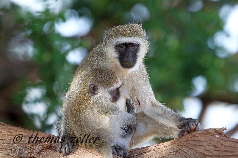 kenya_april_2015_day5_131