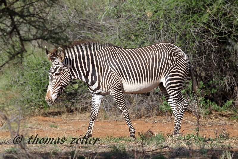 kenya_april_2015_day5_137