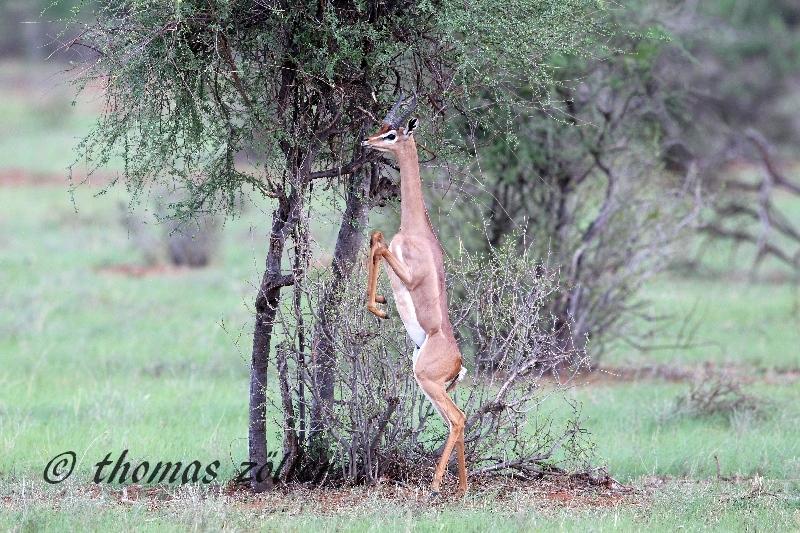 kenya_april_2015_day5_139