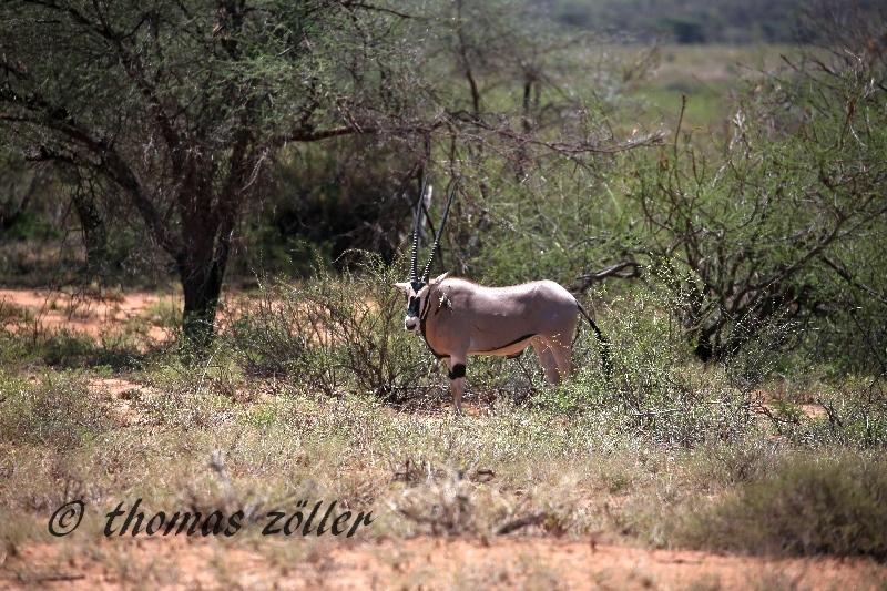 kenya_april_2015_day5_152