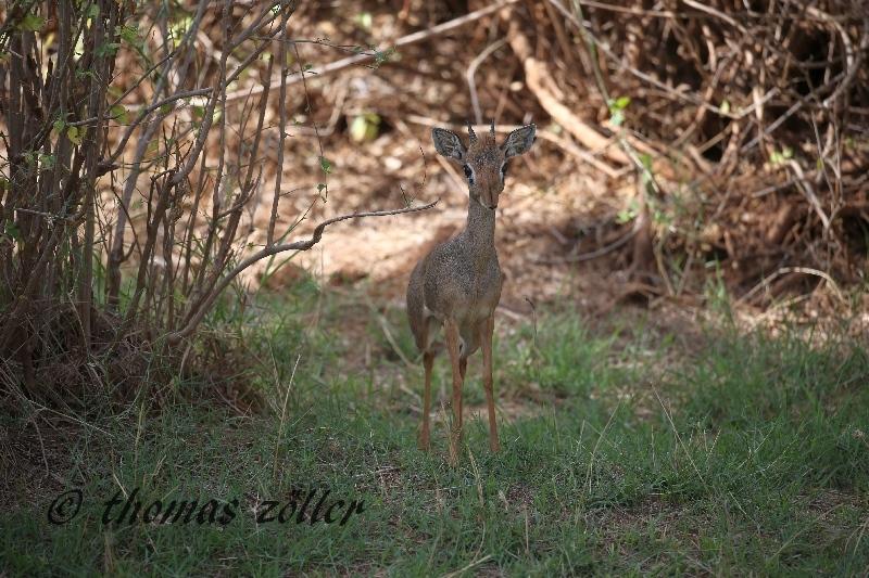 kenya_april_2015_day5_173