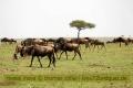 13.09.2017 - Masai Mara Kenya