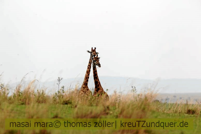 2017masai-mara-2_653
