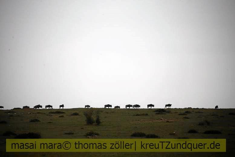 2017masai-mara-2_717