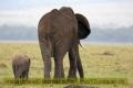 14.09.2017 - Masai Mara Kenya