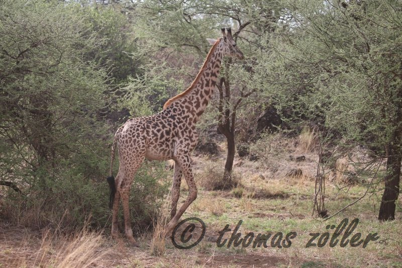 oct-game-drive-1_112