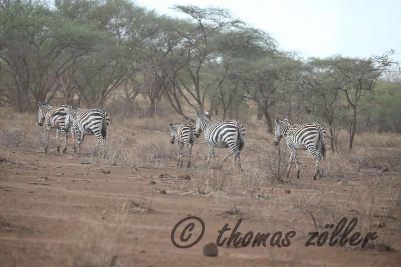 oct-game-drive-1_116