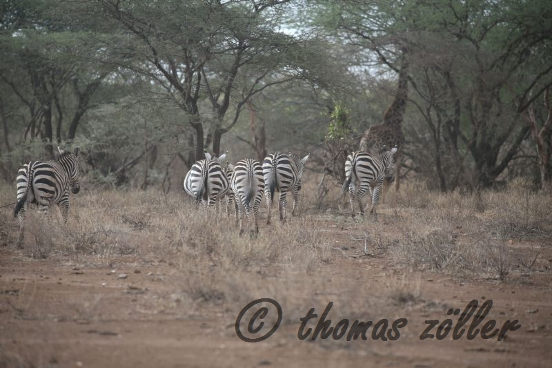 oct-game-drive-1_117