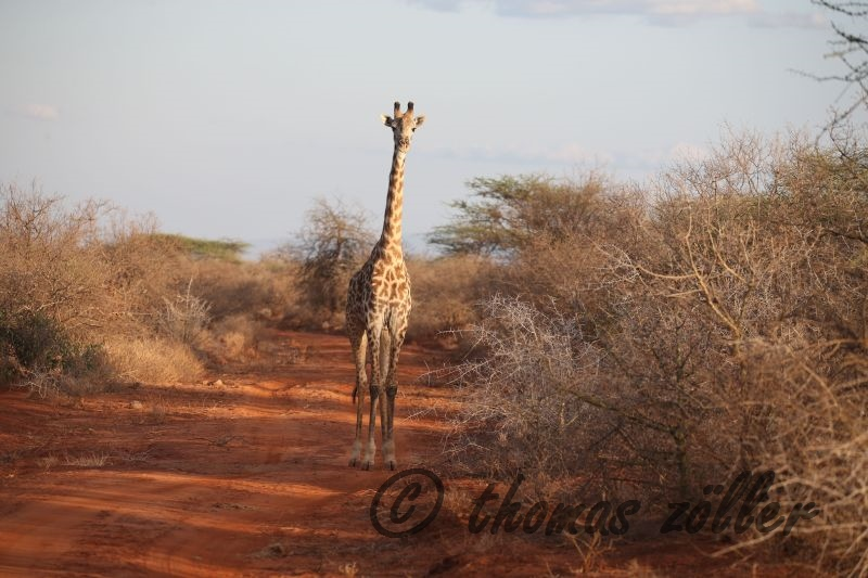 oct-game-drive-1_118
