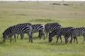 27.01.2015 - Masai Mara Kenya
