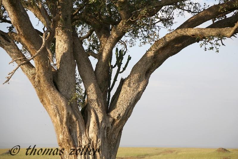 masaimara-day3_273