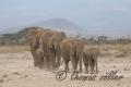 29.10.2015 - Amboseli - Kenya