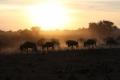 30.10.2015 - Amboseli - Kenya