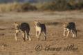 31.10.2015 - Amboseli - Kenya