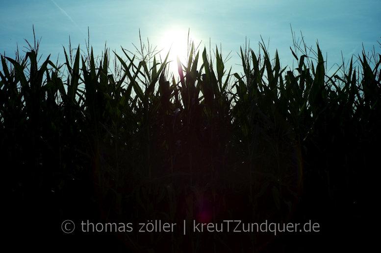 306|365 # 26. august 2017 # hochzeit